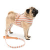 Dog Harness - annabeljames
