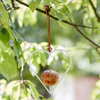 Apple Bird Feeder - Heart - annabeljames