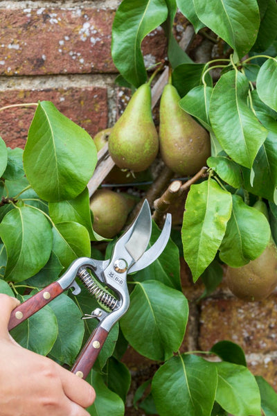 High Performance Secateurs