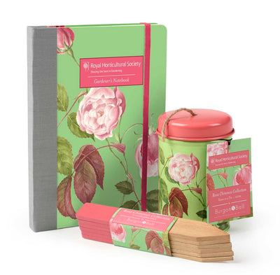 Rosa Chinensis Notebook - annabeljames