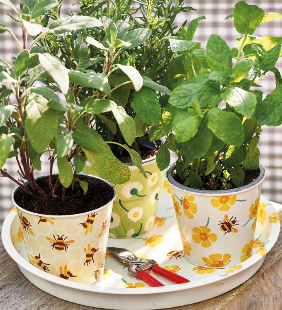 Emma Bridgewater Buttercup Herb Pots Annabel James