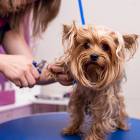 How To Find The Right Groomer For Your Dog