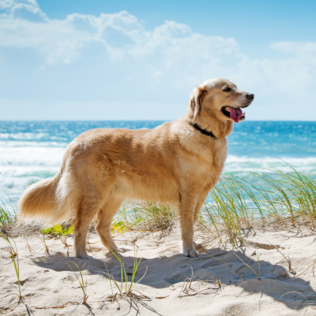 Sun Protection For Your Dog