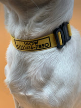 Custom Collars - Mutt Cosmetics Collars