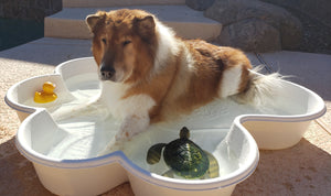 dogpools.shop One Dog One Bone  White  Paw Pool