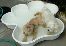 2 Bone Pool 2 Paw Pool Package