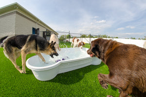 dogpools.shop One Dog One Bone  White  Bone Pool