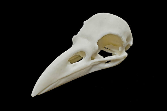 Carrion Crow Skull || Vegan Friendly Renewable Material Ethically Sourced Replica Skull 3D printed Avian Raven Skull Gothic Home Decor