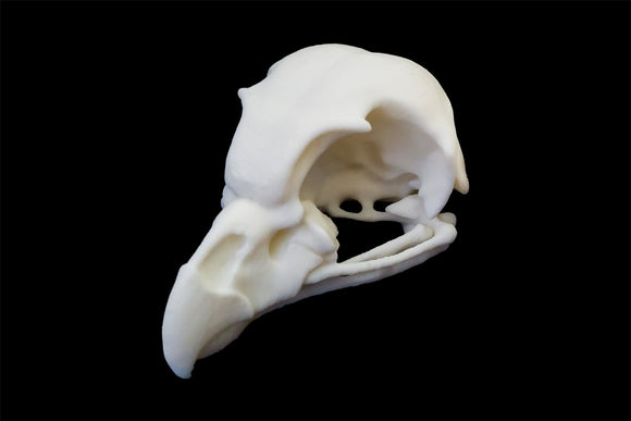 Great Grey Owl Skull || Vegan Friendly Renewable Material Ethically Sourced Replica Skull 3D printed Owlet Hen Skull Gothic Home Decor