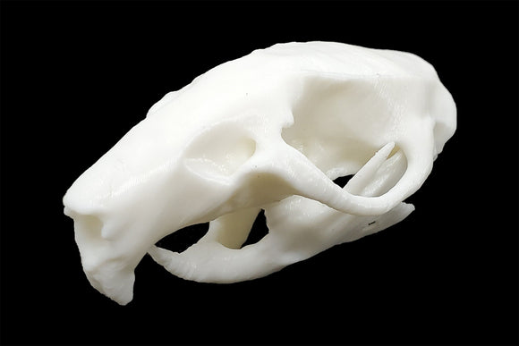 Ricefield Rat Skull || Vegan Friendly Renewable Material Ethically Sourced Replica Skull 3D printed Rodent Mouse Skull Gothic Home Decor