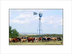 Windmill & Cows