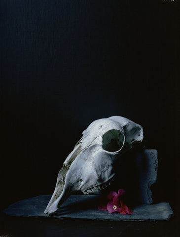 Sheep Skull and Red Flower