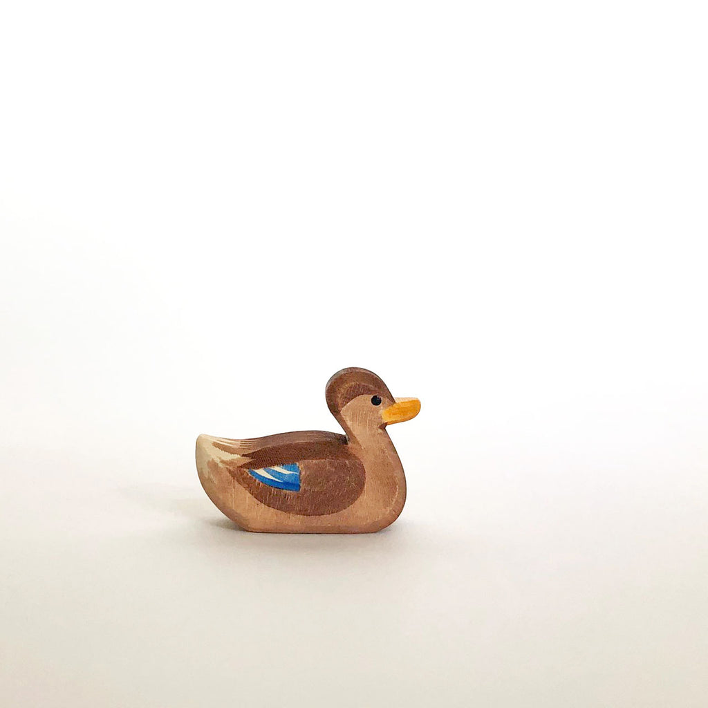 Duck Swimming By Ostheimer