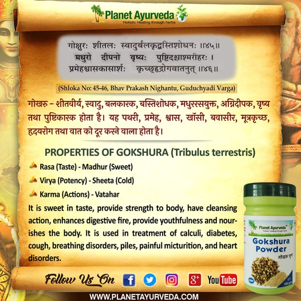 Classical Reference of Gokshura, Tribulus terrestris