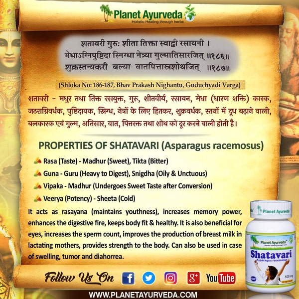 Classical Reference of Shatavari
