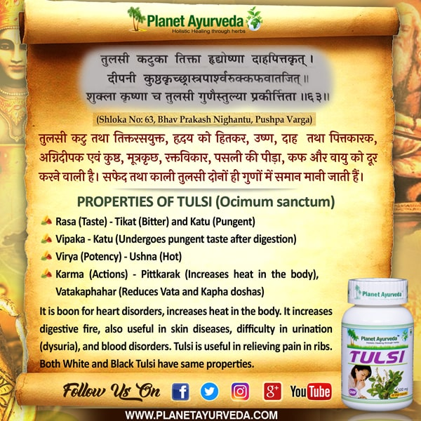 Classical Reference of Tulsi (Ocimum tenuiflorum)