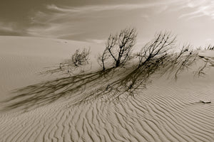 DUNE SCRUB, a Photograph by Jack Neary