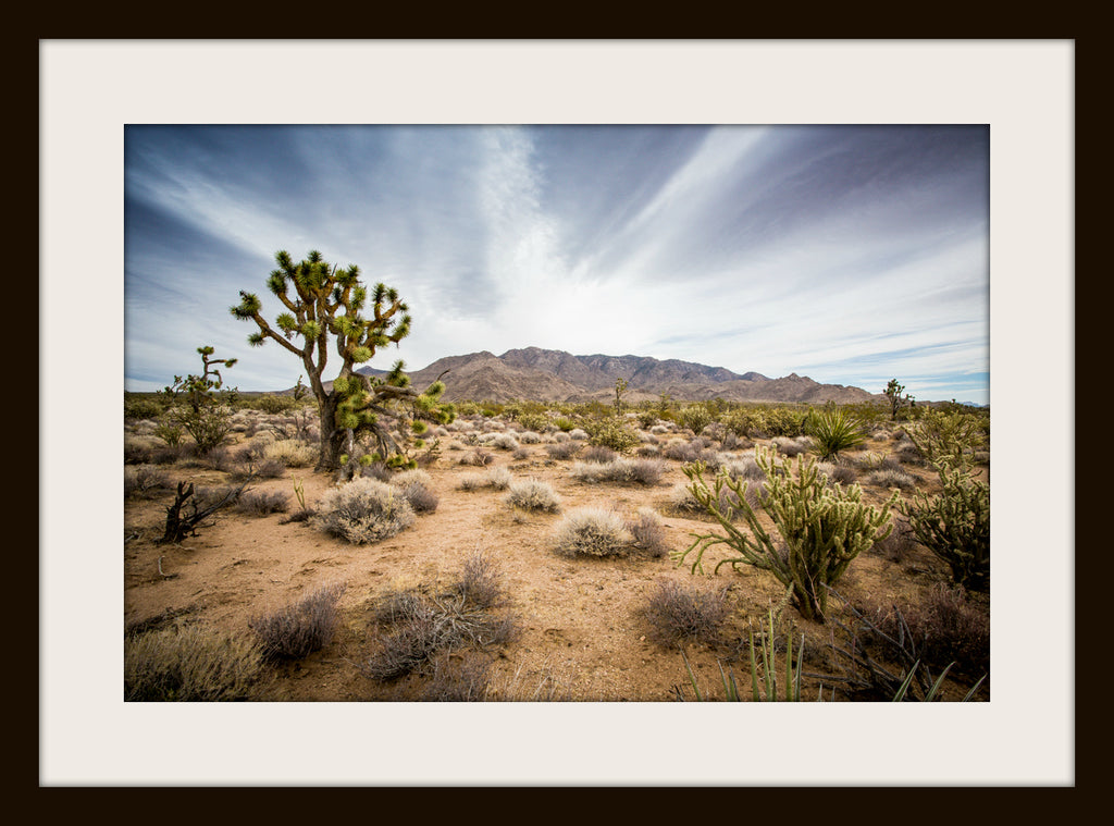 JOSHUA TREE, a Photograph by Joel Clements