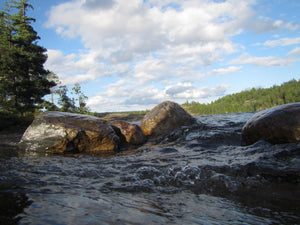 TEMAGAMI SHORE, a Photograph by Ronnie Lebow