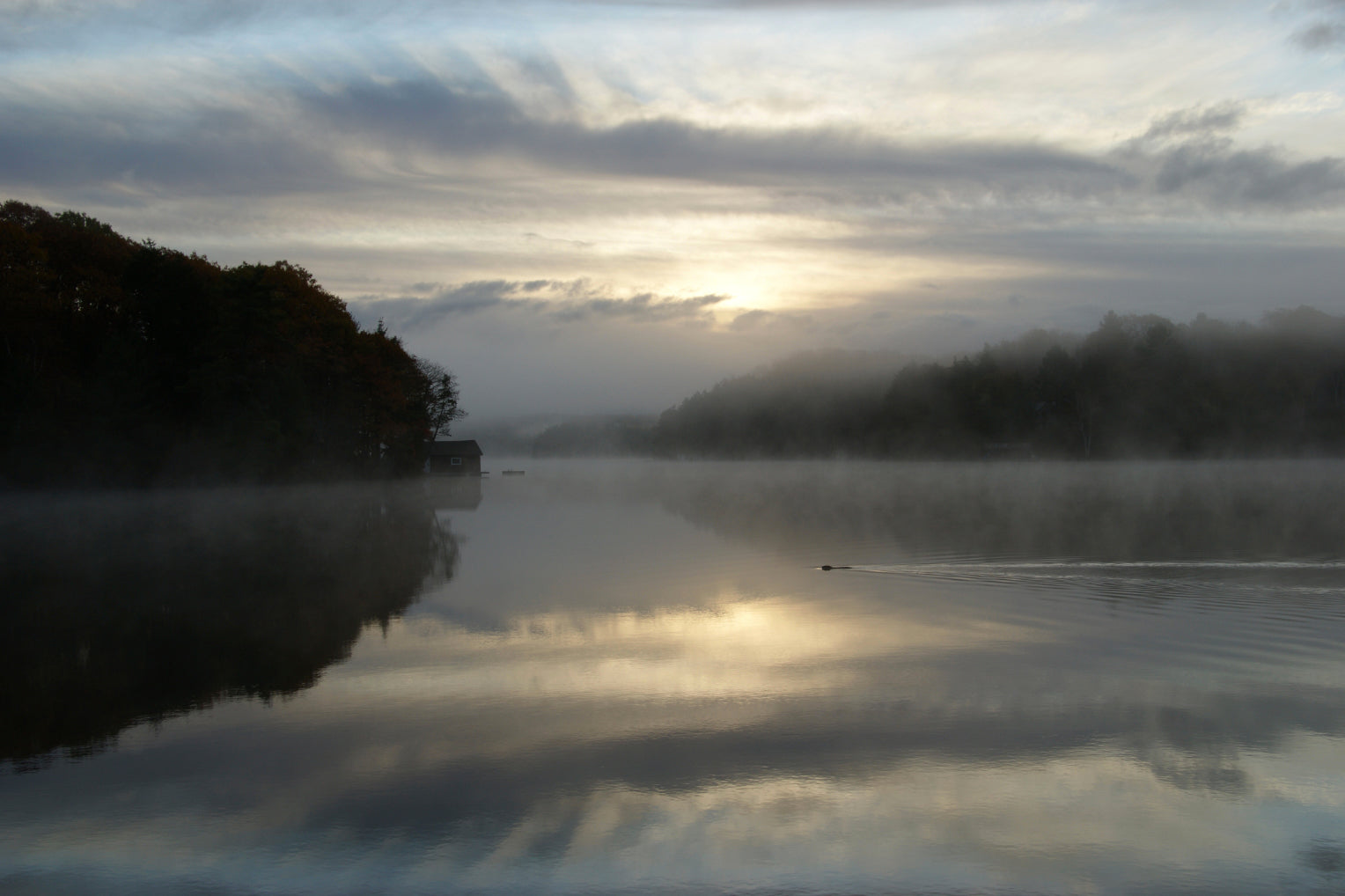 BEAVER IN MORNING,  a Photograph by Ronnie Lebow