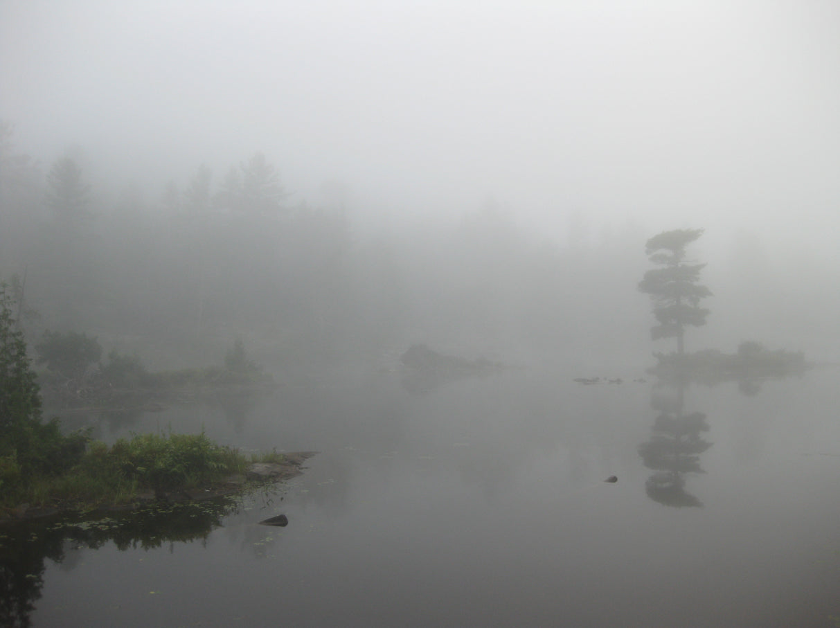 IN THE MIST,  a Photograph by Ronnie Lebow