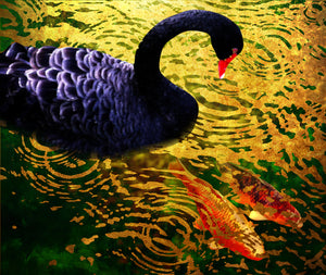Byodo Temple Black Swan and Koi