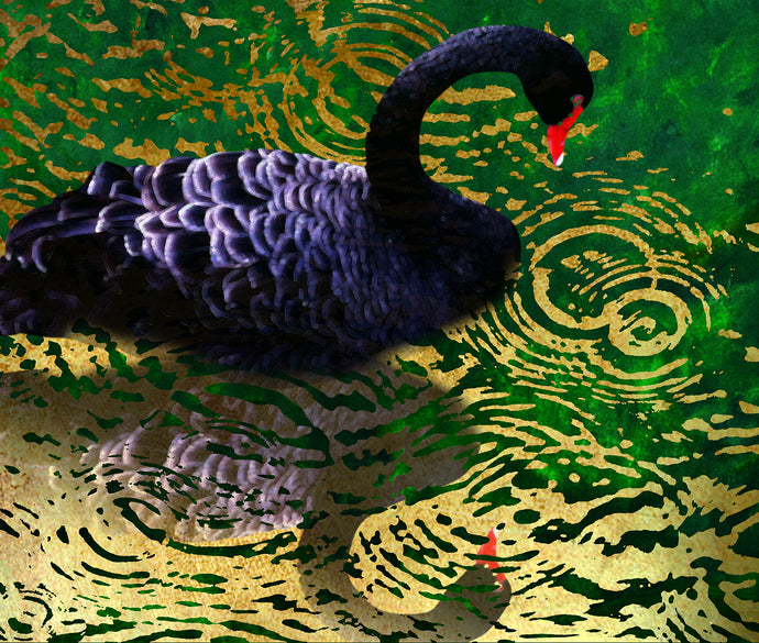 Byodo Temple Black Swan
