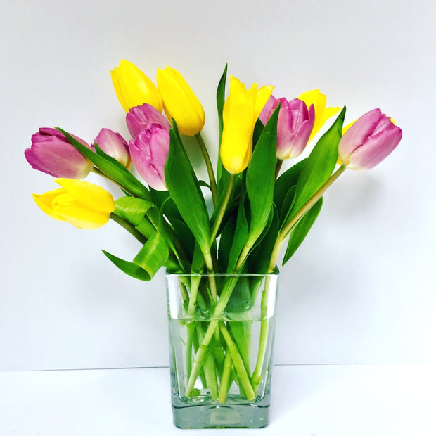 Refreshing Mixed Tulips