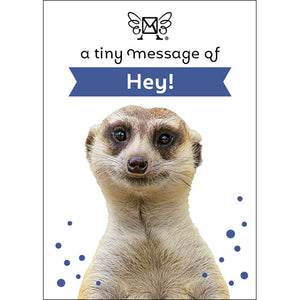 A TINY MESSAGE OF HEY MEERKAT