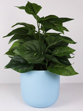 Load image into Gallery viewer, PLANTER MYNX BLUE SML 13CM