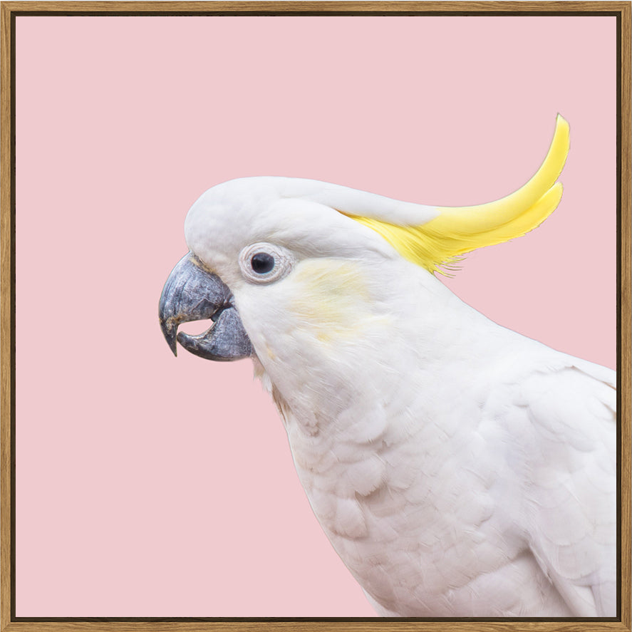 FLOATING FRAME PASTEL PINK COCKATOO