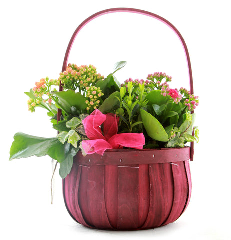 Basket of Kalanchoes