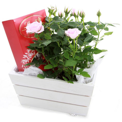 Rose and Chocolates Hamper