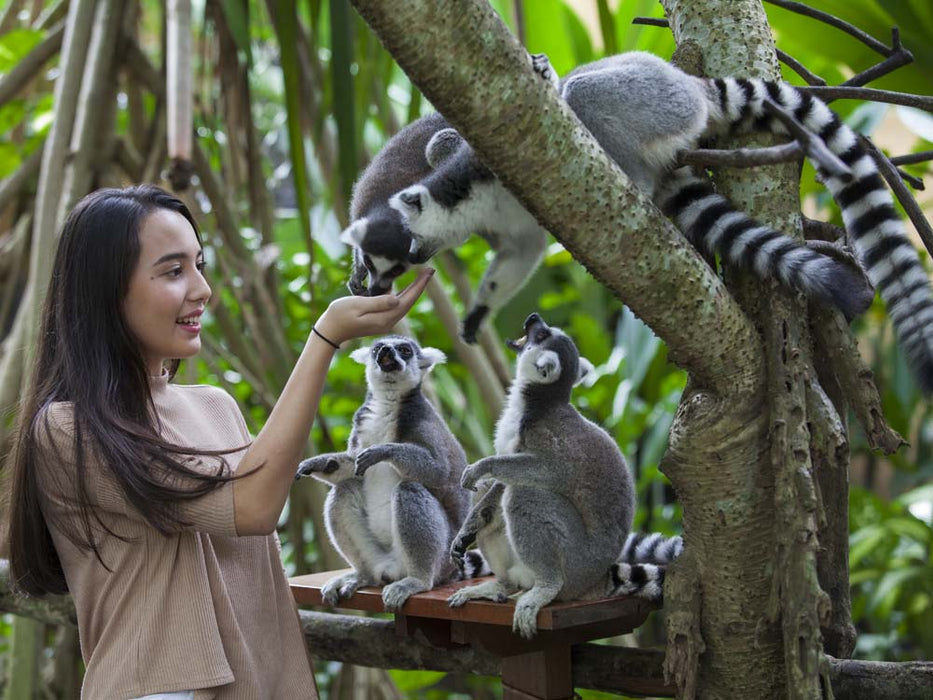 Bali Zoo Ticket incl. Transportion & Lunch