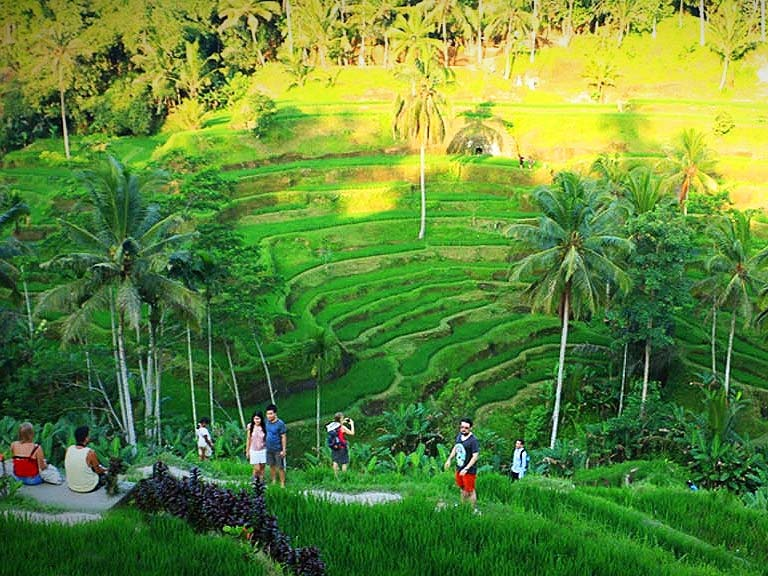 8-10h Bali Nature Tour, Waterfall, Active Volcano, Lake, Coffee Plantation and Rice FIeld