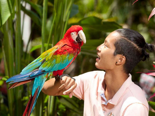 Bali Bird Park w. Transport (2+pax)