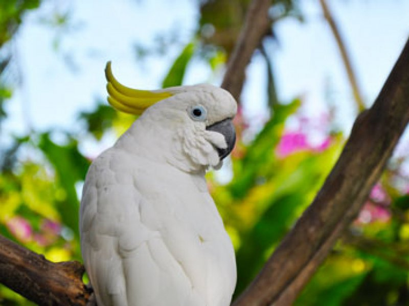 Bali Bird Park Family Package