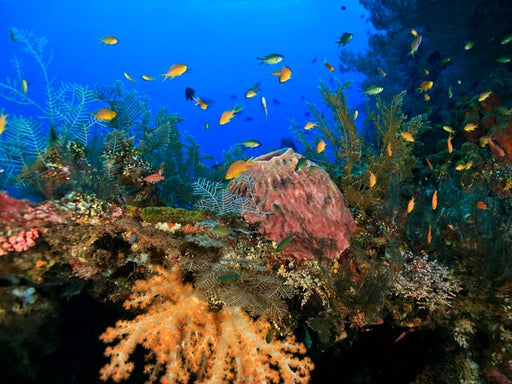 Diving Package at Nusa Lembongan & Nusa Penida (For Certified Diver from Lembongan Area)