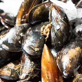 Mussels Facts & Tips