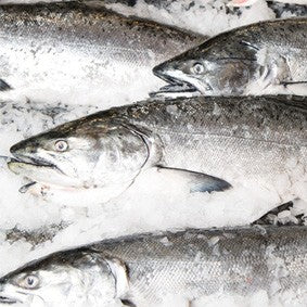 Wild About Salmon How To Store Fresh Salmon Pure Food Fish Market