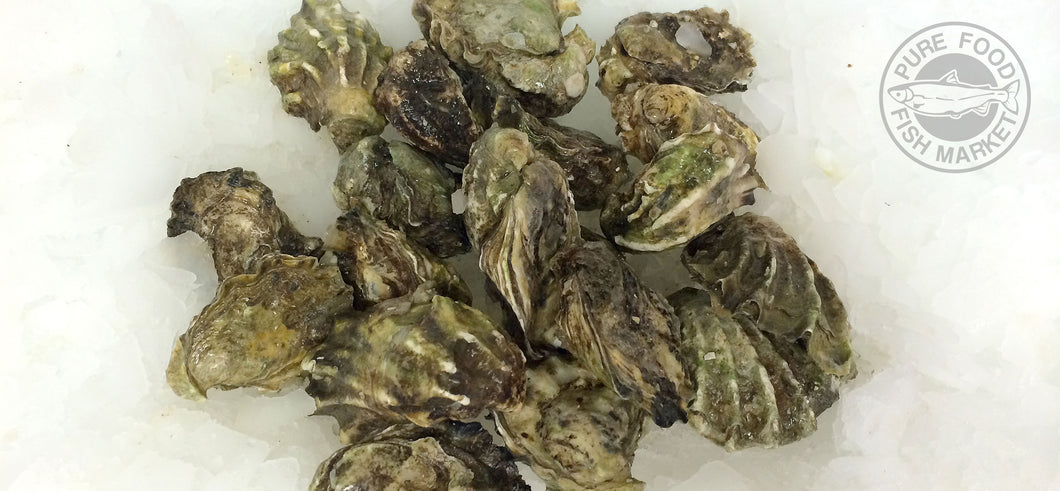 Kumamoto Oysters in the shell