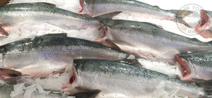 Fresh Whole Copper River Sockeye Salmon - 5 lbs.