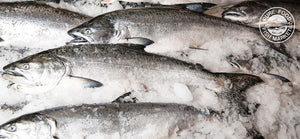 Fresh Whole Silver Salmon
