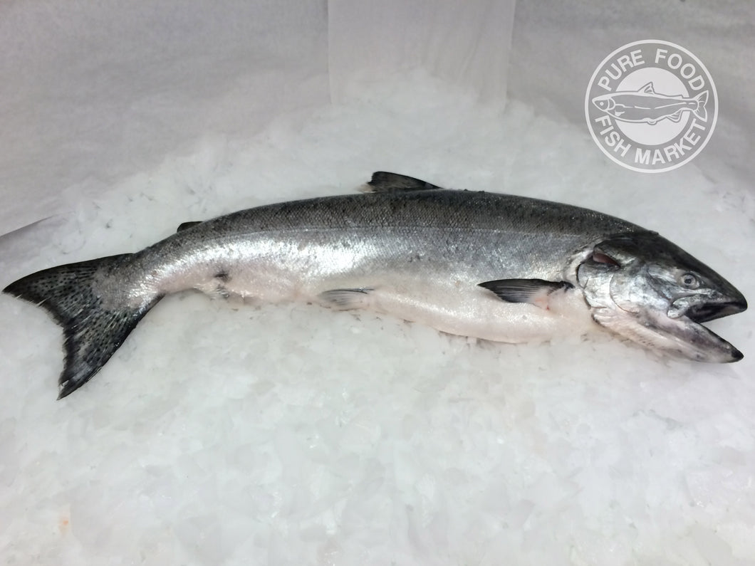 Fresh Whole Alaskan King Salmon - 11-12 lbs.