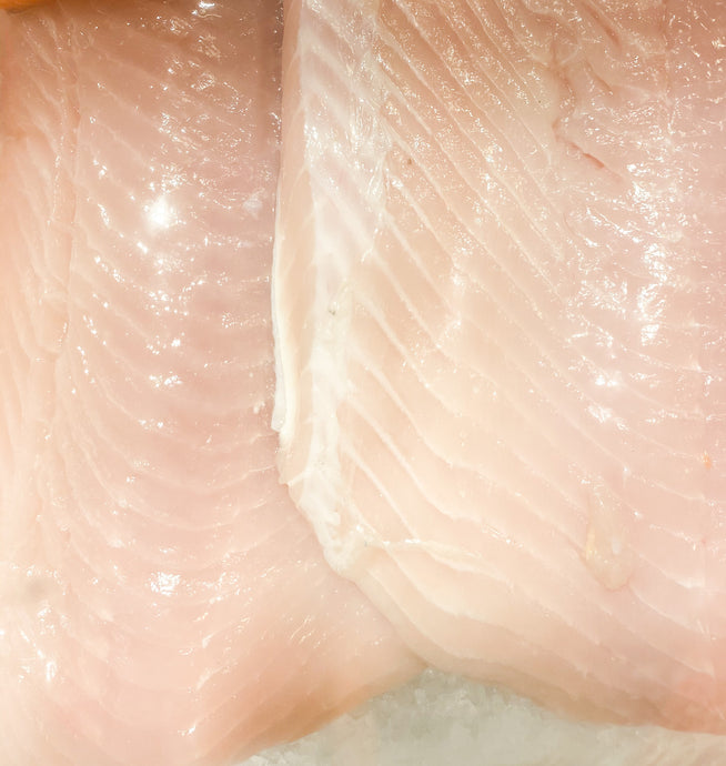 RARE! Fresh Alaskan White King Salmon