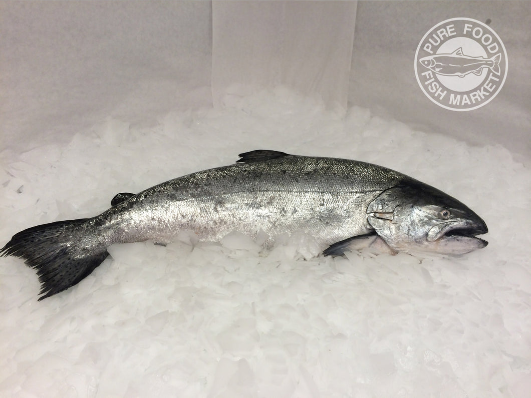 Fresh Whole Northwest King Salmon - 7-8 lbs.