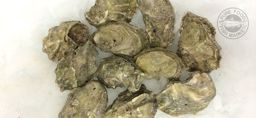 Fresh Extra Small Quillcene Oysters In Shell