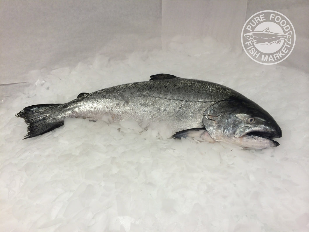 Fresh Whole Northwest King Salmon - 9-10 lbs.