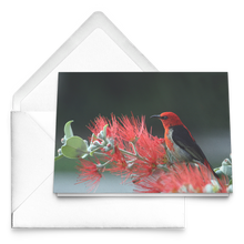 Load image into Gallery viewer, Folded Cards - Montana Series [Red bird on mountain thistle]