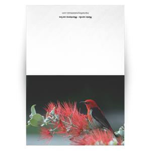 Folded Cards - Montana Series [Red bird on mountain thistle]